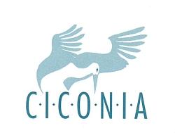 Ciconia Lichtenstajn